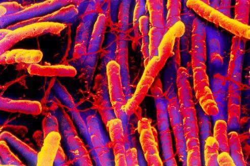 Notre Intelligence Bactérienne